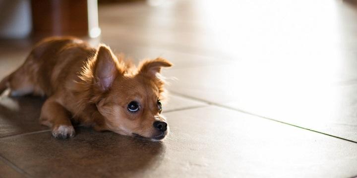 perros colesterol1