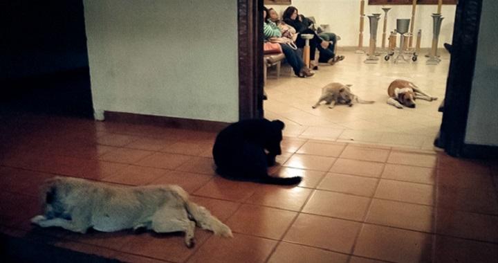 perros funeral