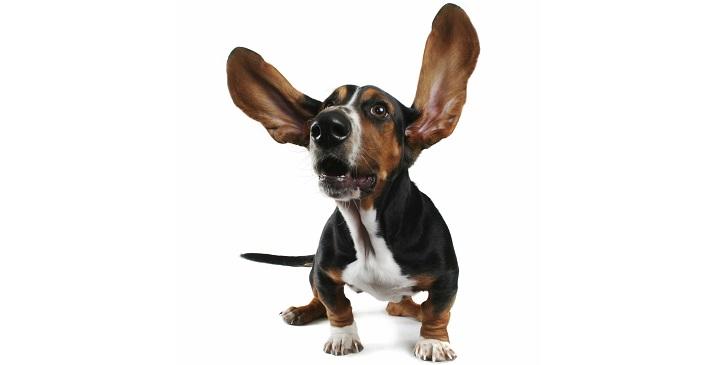 sordera perros