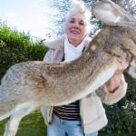 El conejo más grande del mundo