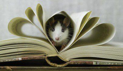 Fotos ratas5