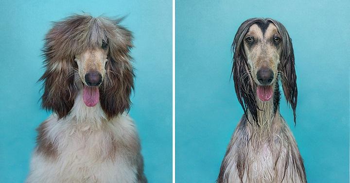 Serenah Hodson perros mojados