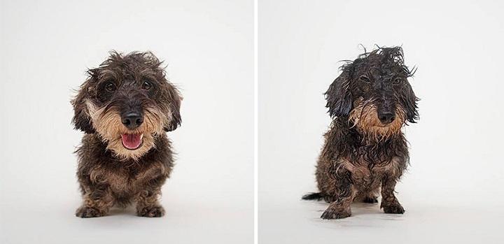 Serenah Hodson perros mojados1
