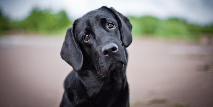 adoptar perro calle1