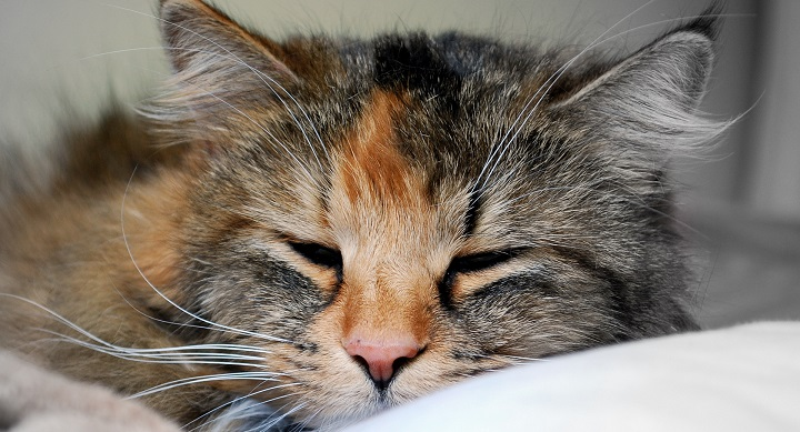 gato mayor higiene