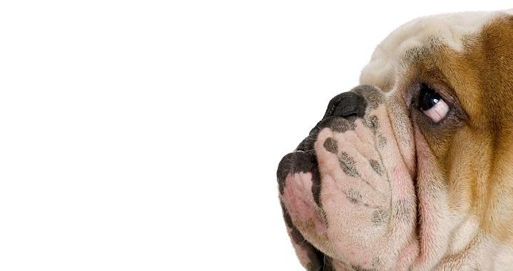 obesidad perros1