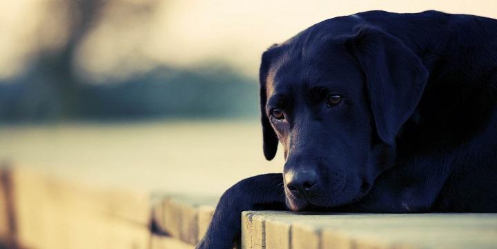 perro depresion sintomas1