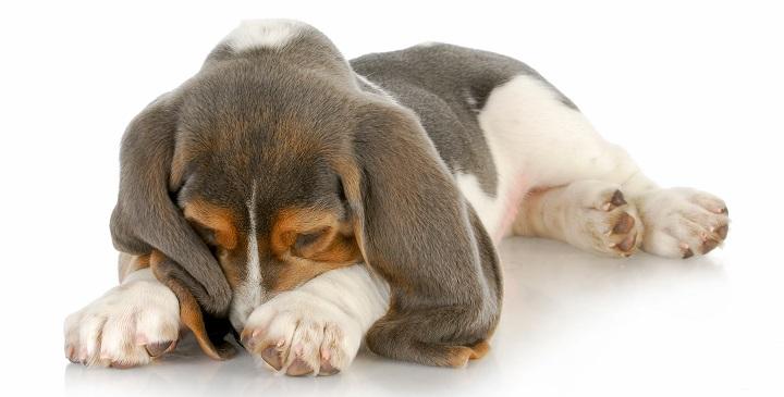 perros insomnio1