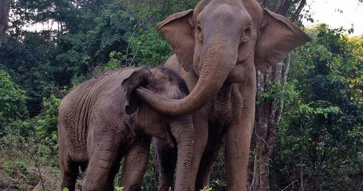 reencuentro elefantas