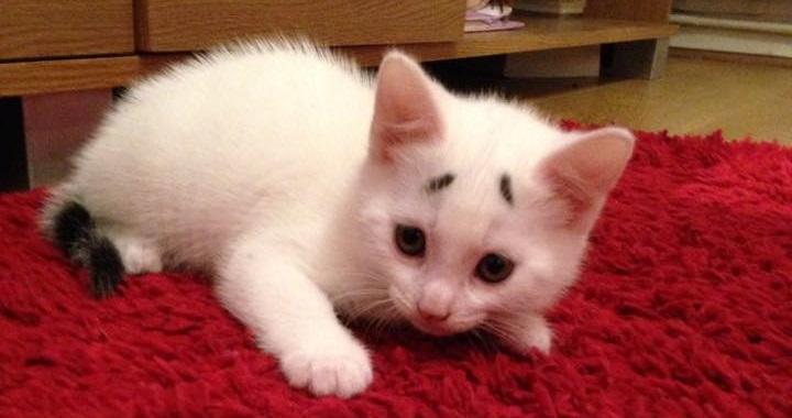 Gary gato