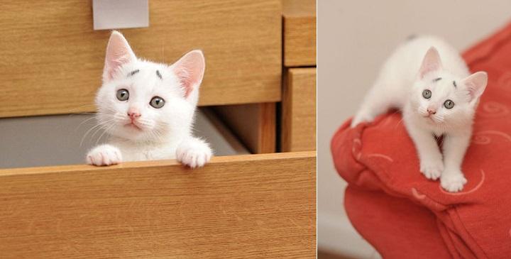 Gary gato1