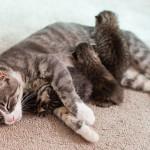 Una gata que había perdido a sus crías adopta a 3 gatitos abandonados