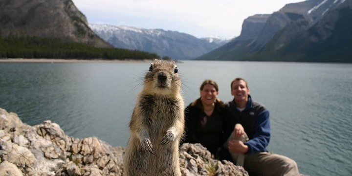 animales photobomb1