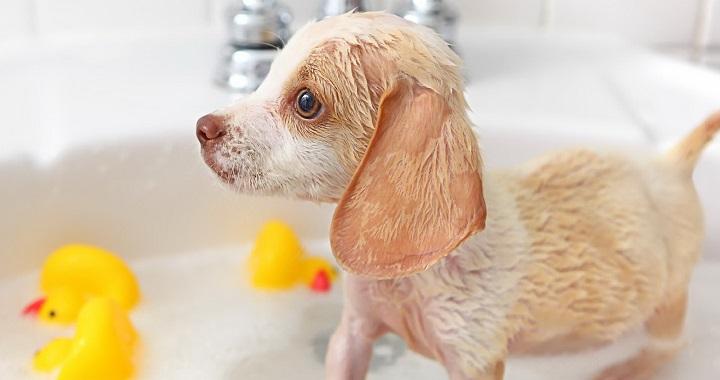 cuidados piel perros1