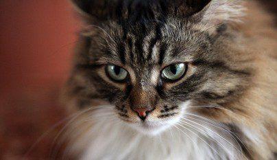 gatos mayores problemas