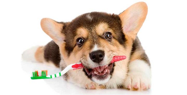 higiene dental canina1