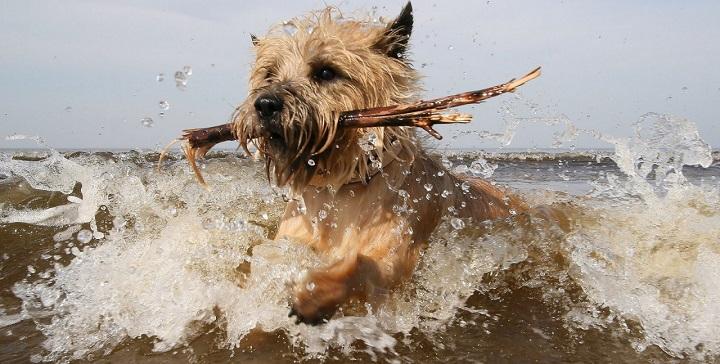 perros playa actividades
