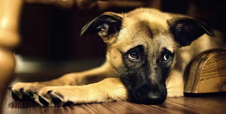 detectar perro maltratado1