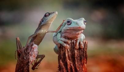 fotos ranas y sapos13