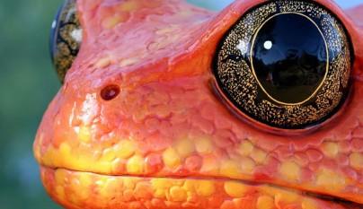 fotos ranas y sapos15