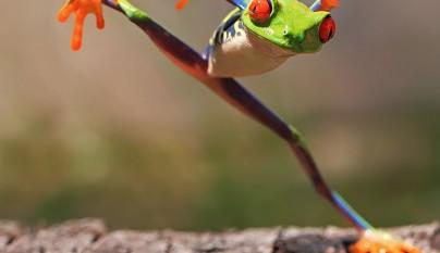 fotos ranas y sapos16