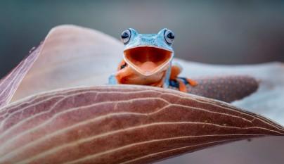 fotos ranas y sapos3