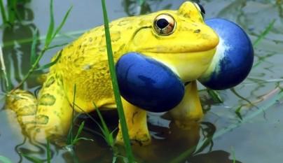 fotos ranas y sapos6