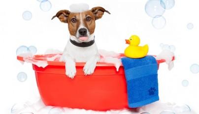 frecuencia bano perro