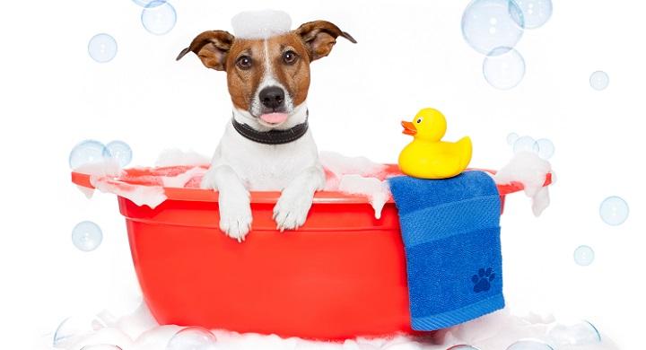 Baño Ninos Frecuencia:Con qué frecuencia hay que bañar a los perros?