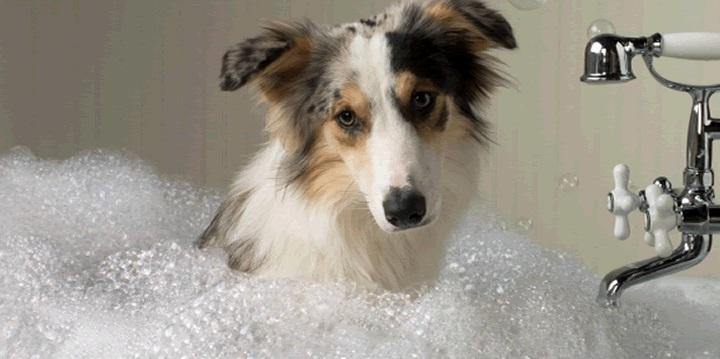 frecuencia bano perro1