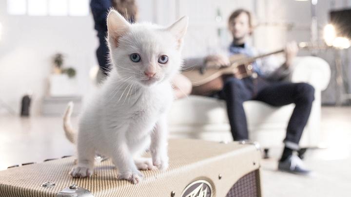 gatito Advance