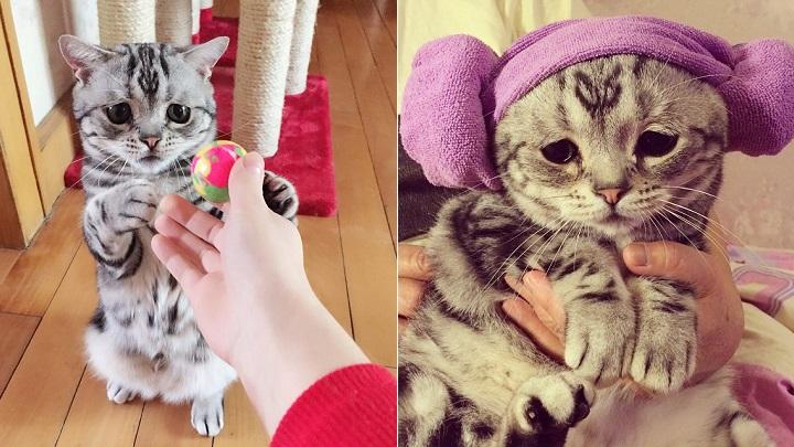 gato Luhu1