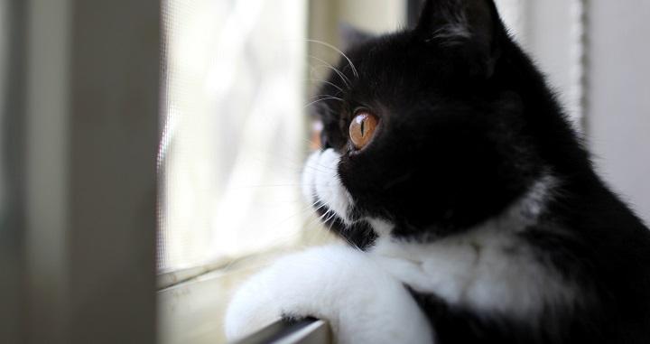 gatos peligros en casa