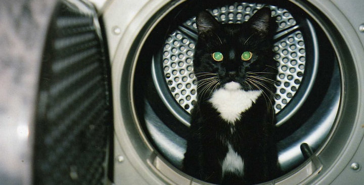 gatos peligros en casa1