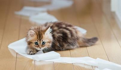 juego gato importancia