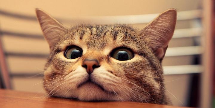 juego gato importancia1