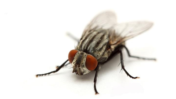 mosca invierno1