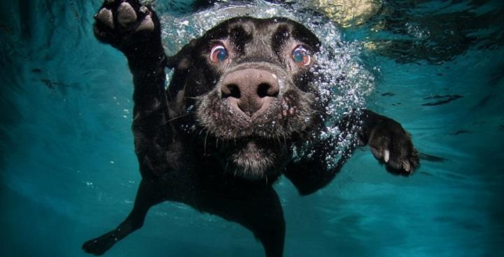 otitis perro verano1