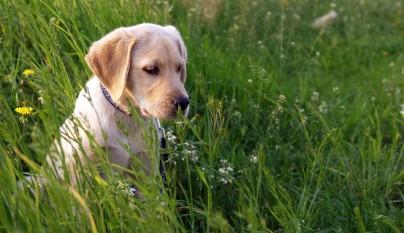 perro garrapatas verano