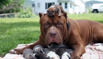 Hulk y cachorros1