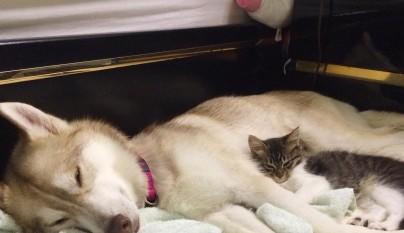 Lilo y Rosie6