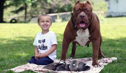 Pitbull Hulk y cachorros1