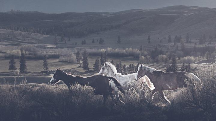 Troy Moth caballos