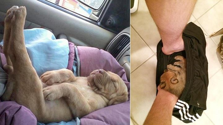cachorro durmiendo fotos