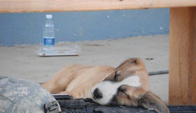 cachorro durmiendo10