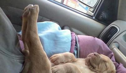 cachorro durmiendo14