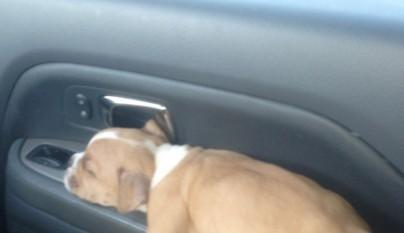 cachorro durmiendo16
