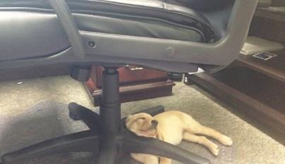 cachorro durmiendo19