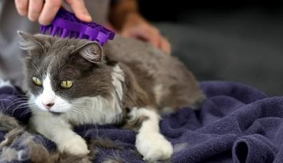 cepillar gato verano