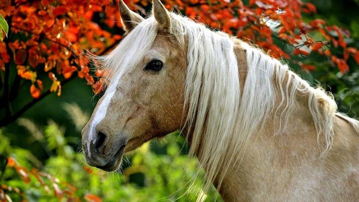 comprar caballo1